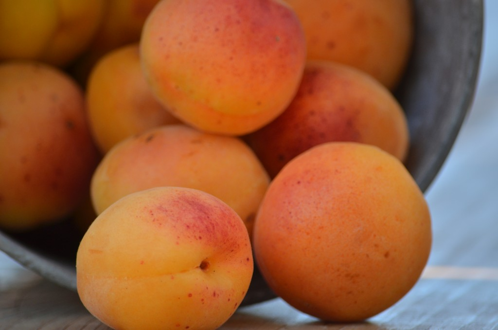 Glorious, glorious apricots!